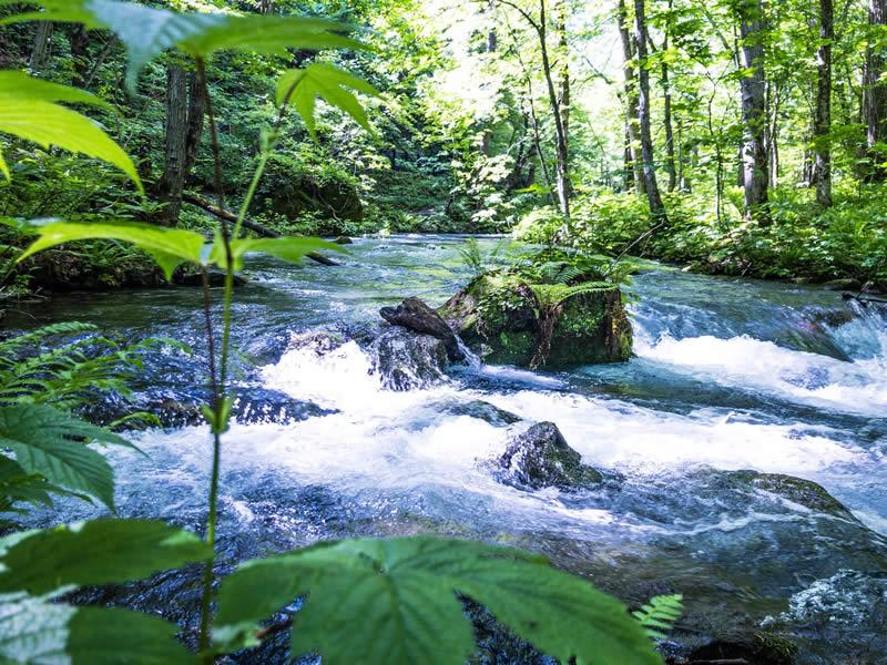 奥入瀬渓流の川の流れ1