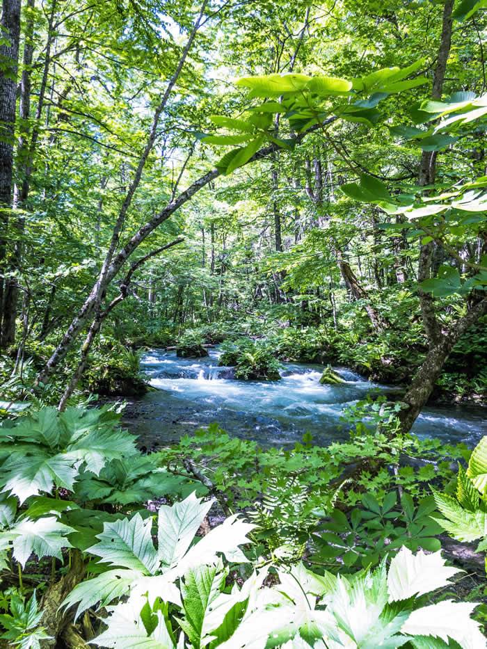 奥入瀬渓流の川模様